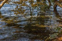 Rund um den Laacher See (66)
