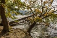 Rund um den Laacher See (78)