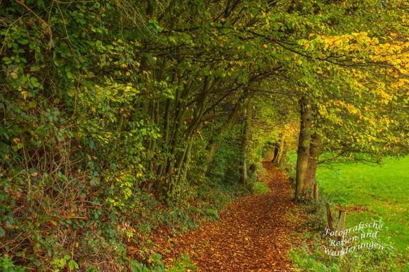 Das bunte Laub färbt die Wanderwege wunderschön