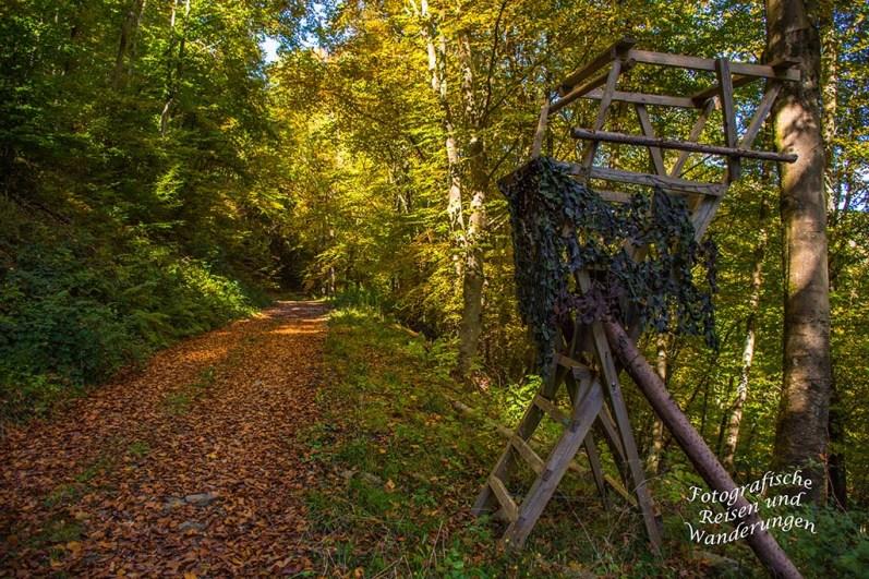 Herbstwaldwege - Moselseitensprung Graf Georg Johannes Weg