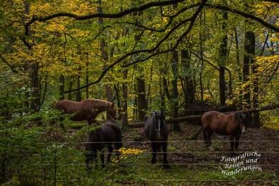 Eine Gruppe Pferde schauen neugierig zu mir hoch