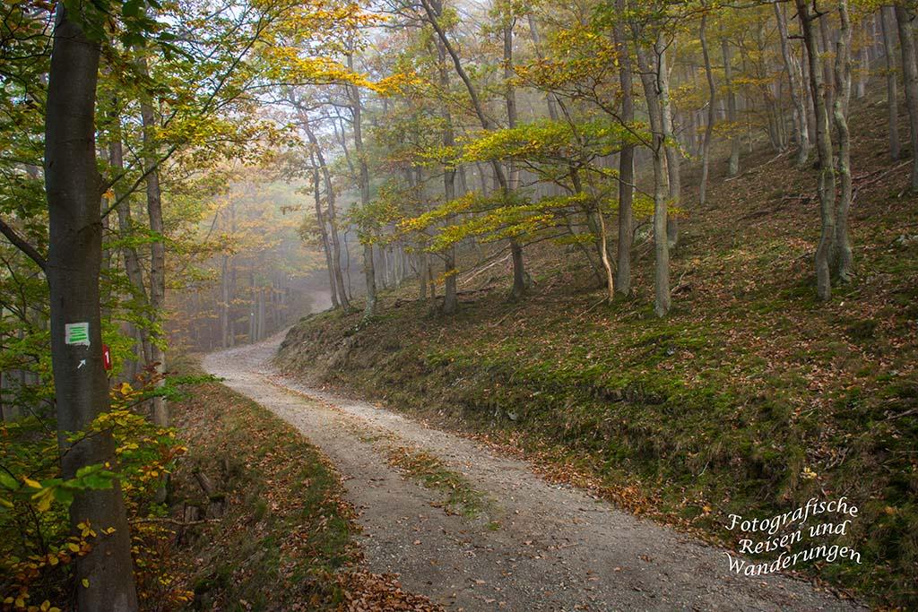 Nebel auf dem Wanderweg Seitensprung Graf-Georg-Johannes Weg