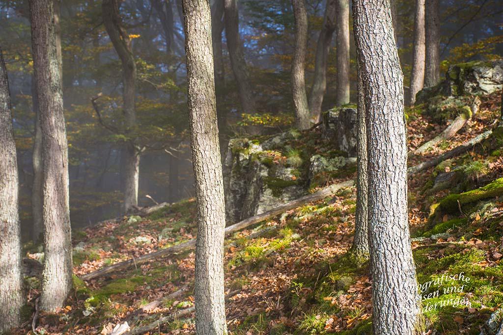 Nebel und Felsen im Herbstwald auf dem Mosel- Seitensprung Graf-Georg-Johannes Weg