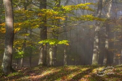 Nebel im Herbstwald Mosel- Seitensprung Graf-Georg-Johannes Weg