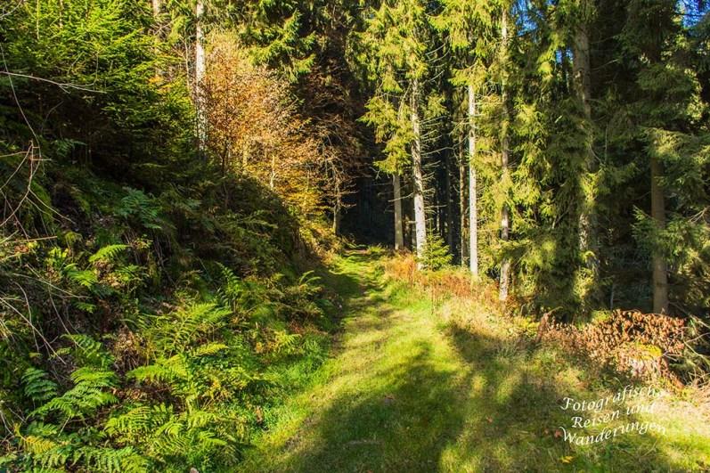 Ein weicher Wiesenweg ist mir vergönnt, führt durch ein kleines Waldstück