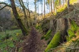 Saubere Reihe von abgeholzten Bäumen