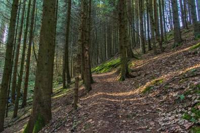Es geht hinauf, Richtung Imgenbroich durch den dunklen Nadelwald