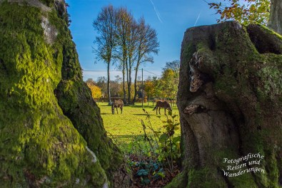 Zwischen den gefällten Bäumen hindurch, der Blick auf die Pferdewiese