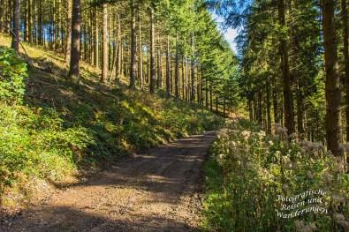 Waldweg mit Blumen rechts am Weg