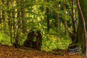 Skurrile Gestalten formen sich aus Baumresten