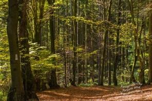 Herrliche Lichtstimmung im hellen Wald