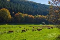 Blick von einer Romantische Bank auf eine Rinderherde