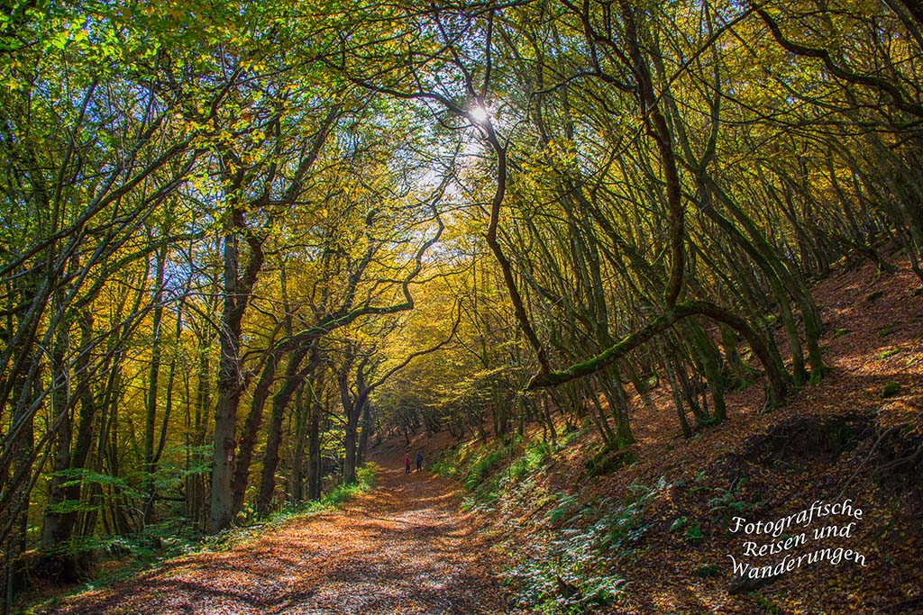 Waldweg in Hunolstein