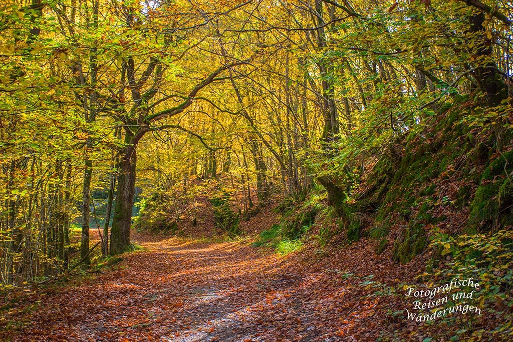 Waldweg mit Sonne - Hunolstein