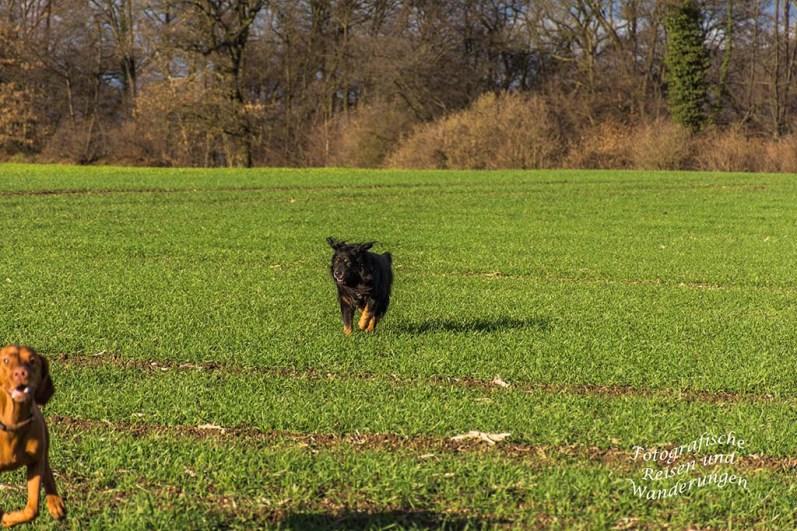 Spike auf der Jagdt nach dem allerbesten Duft des heutigen Tages