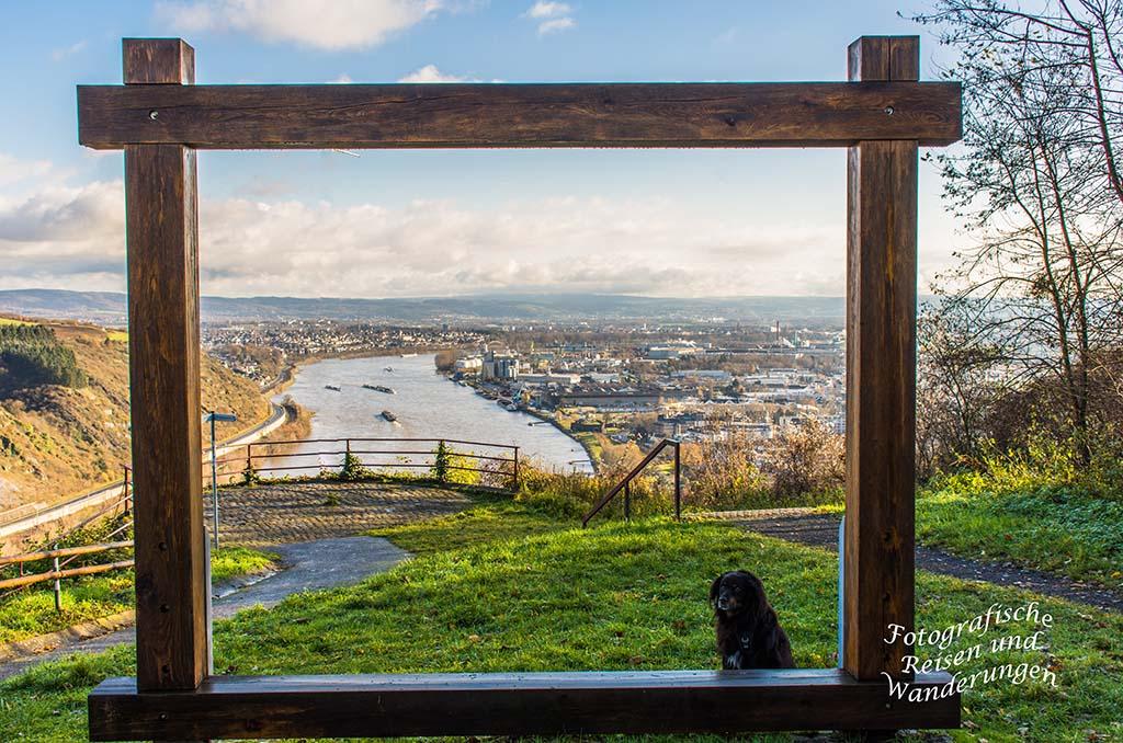Aussicht auf den Rhein und Andernach - Traumpfädchen Kleiner Stern