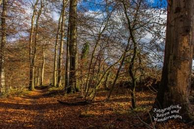 Herrlicher und sonniger Waldweg