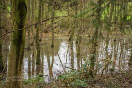 Aue oder Sumpf? Ergebnis Überlauf des Ölbach