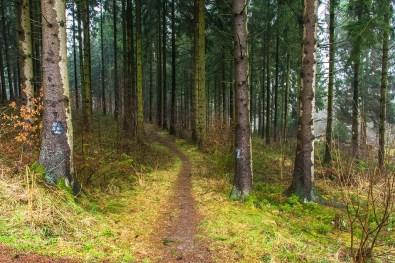 Pilgerpfad und Heerweg (27)