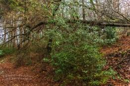 Pilgerpfad und Heerweg (73)