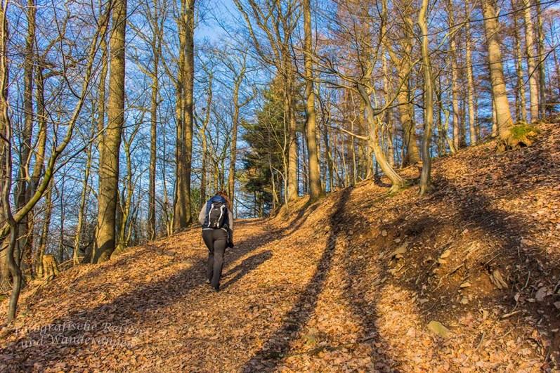 Ein heller Waldweg führt wieder einmal hinauf auf die Höhen
