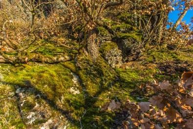 Aussichten und eine Burgruine an der Ahr (183)