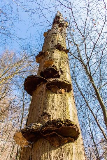 Altes, totes Holz, so scheint es. Aber für mache Kulturen bietet auch dieses Holz noch Lebensraum