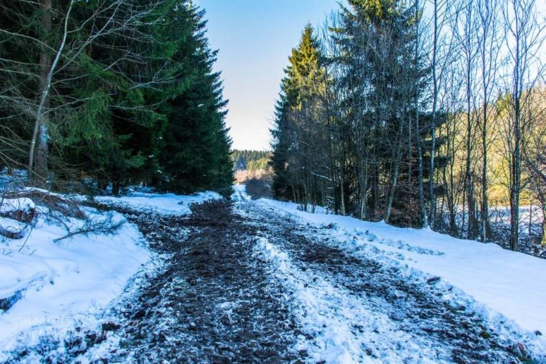 Stark von Forstfahrzeugen aufgewühlter Boden