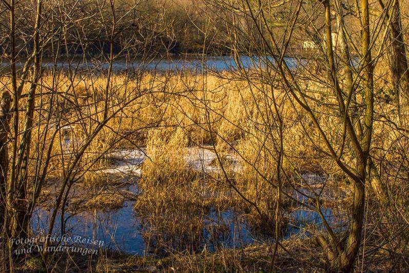 Sumpfige Uferbereiche an der Rur