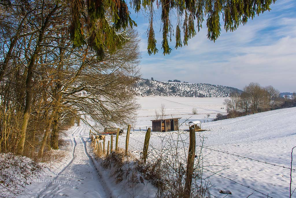 Schnee und Wacholder in Alendorf
