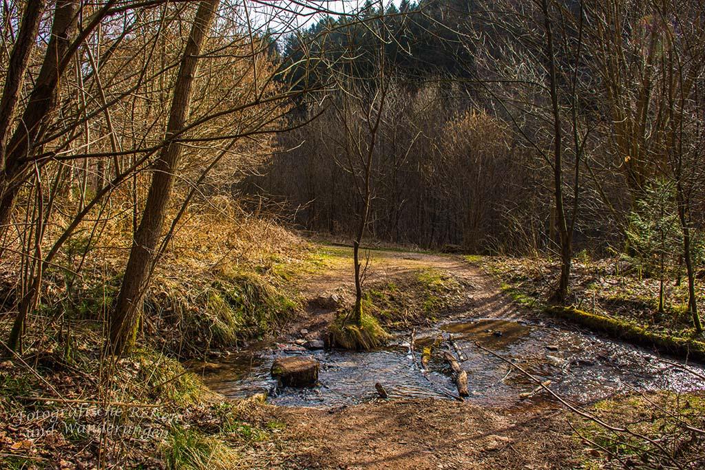 Zufluss zum Eifgenbach Burscheider Schluchtenpfad