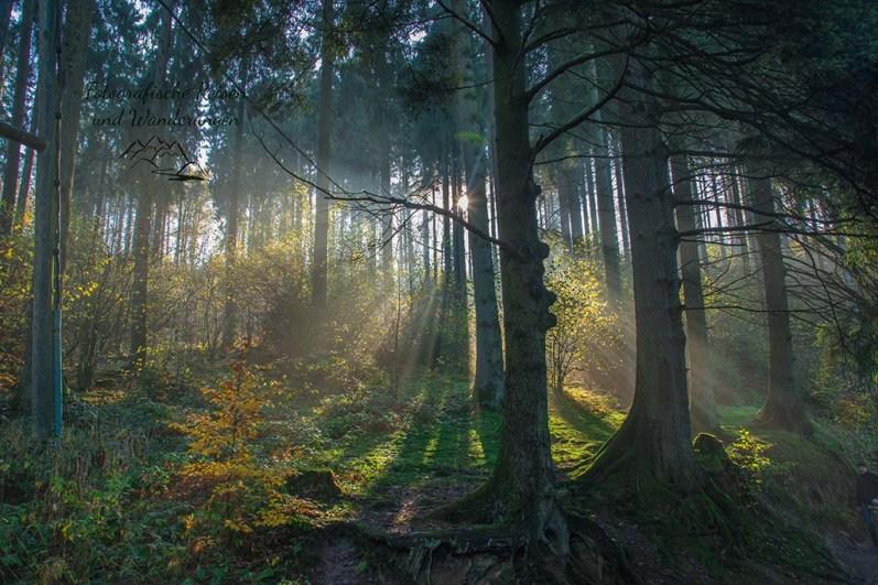 Öicht wie im Märchenwald