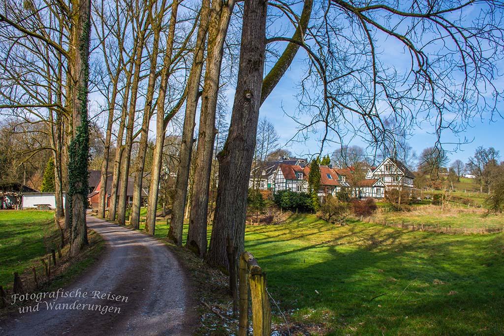 Bellinghausen Dorfansicht - Allee