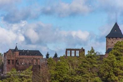 Und noch einmal die Burg Nideggen