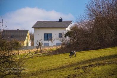Himmelsleiterweg Brohl-Lützing (169)