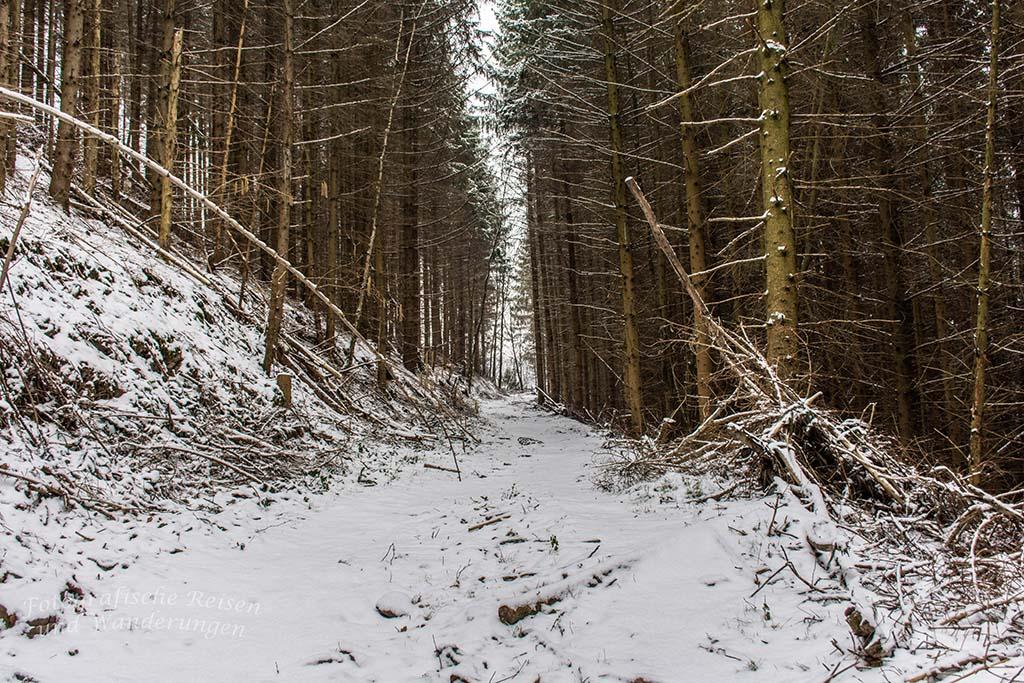 Winter am Eifgenbach (10)