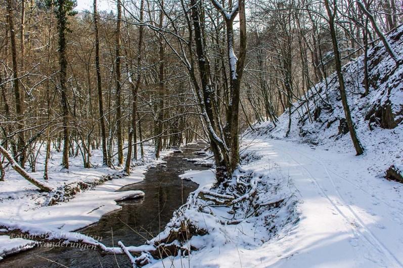 Winter am Eifgenbach (107)