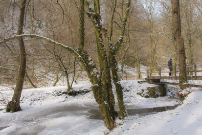 Winter am Eifgenbach (126)