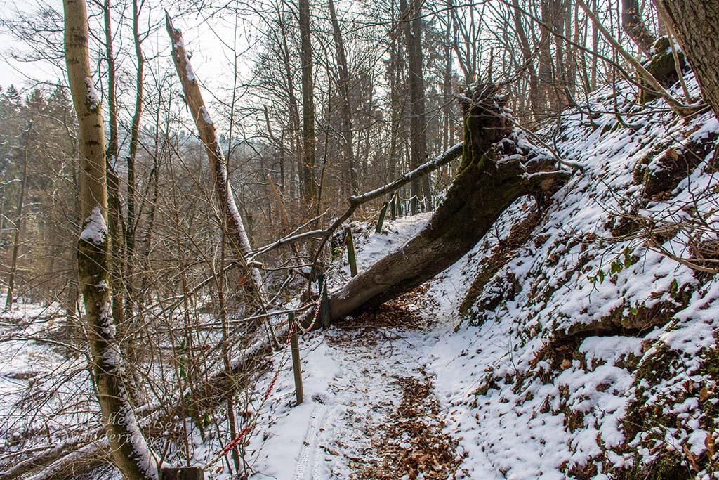 Winter am Eifgenbach (139)