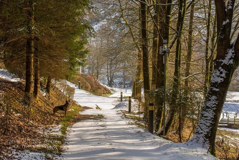 Winter am Eifgenbach (144)