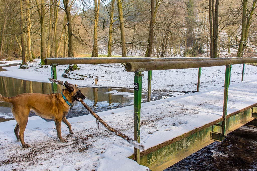 Winter am Eifgenbach (155)
