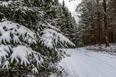 Winter am Eifgenbach (32)