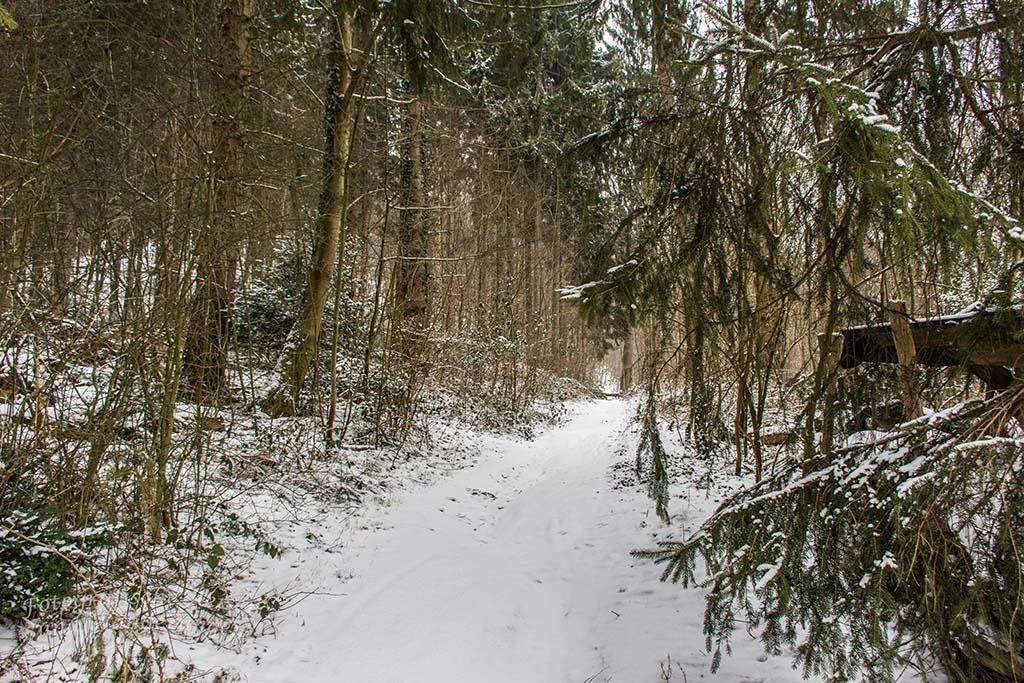 Winter am Eifgenbach (4) - Schneelandschaft