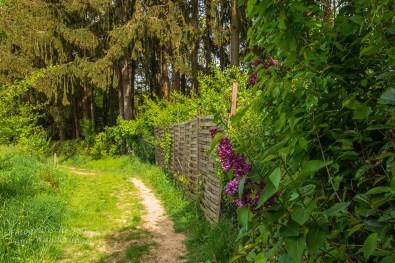 BergischerStreifzugBauernhofweg (73)