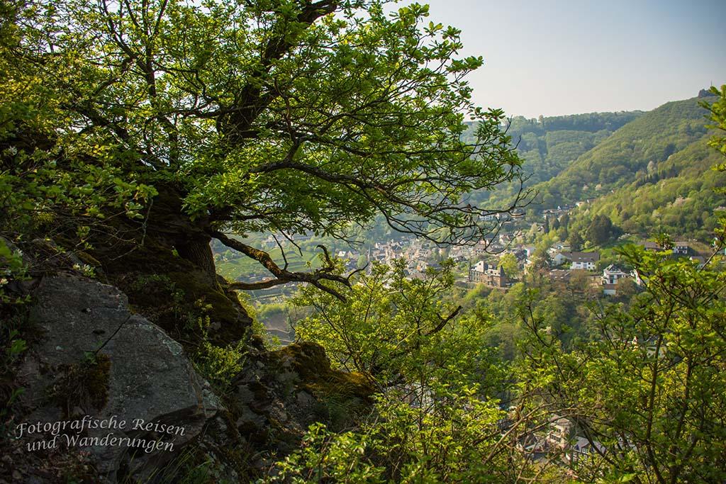 Felsen und Bäume auf der Cochemer Ritterrunde