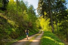 Angenehme Waldwege