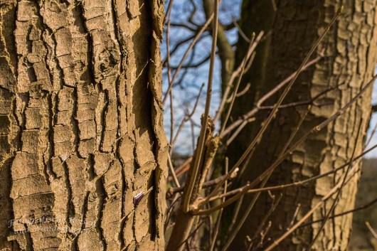 Im Baum steckt etwas, dass ich gerade erst entdeckt habe