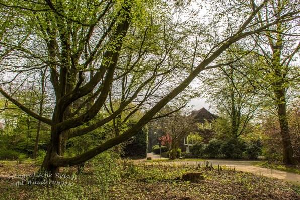 Westerholt Schloss und Wald (173)