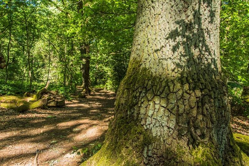 Waldbaden im Birgeler Urwald