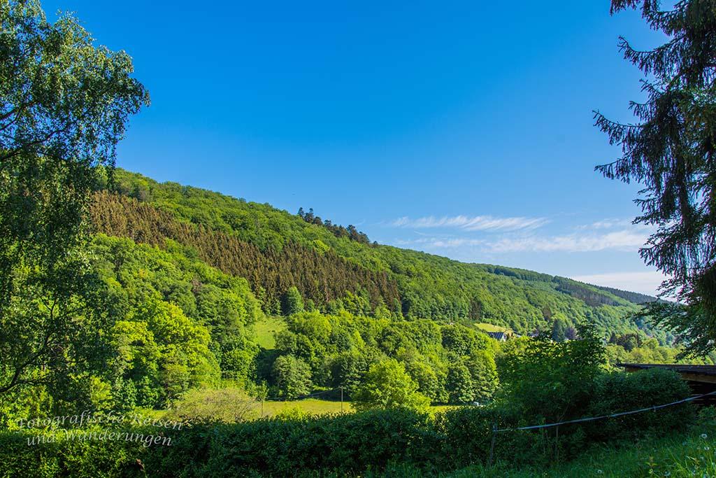 Wälder und Wiesen am Morgen